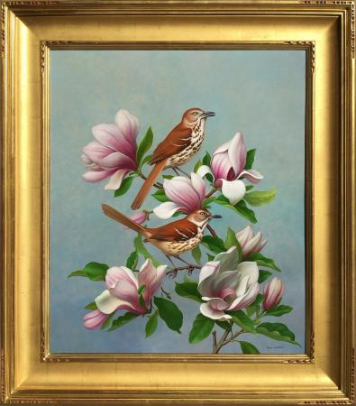 Brown Thrashers in Magnolia